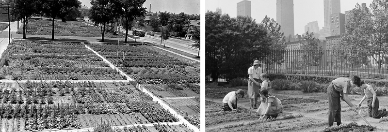 During the Second World War: • 1 in 7 gardeners was a city dweller. • In 1943 there were 15% more home gardeners than in 1942 and 24% more than in 1940. • Gardens were planted at private residences and public parks in Canada, the United States, United Kingdom, and Germany during the World Wars.